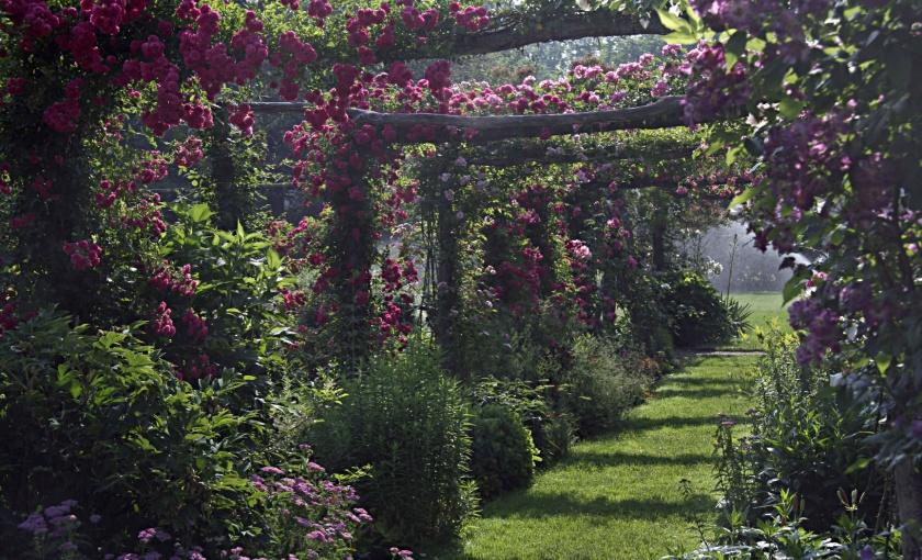 capen-garden-rose-arbor-06-26-07-pamela-dods